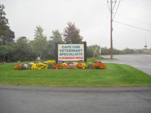 Cape Cod Veterinary Specialists - Bourne, MA
